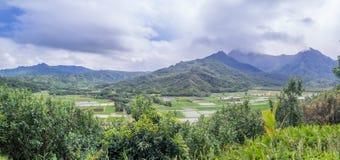 Fält för Hanalei dalTaro på den hawaianska ön av Kauai Royaltyfria Bilder