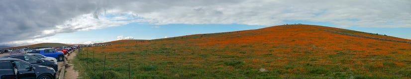 Fält för Kalifornien vallmo i öknen på molnig dag med solstrålar som kommer till och med den molnEschscholzia californicaen och s arkivfoto
