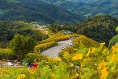 Fält för Maxican solrostusensköna med vägen Arkivfoto