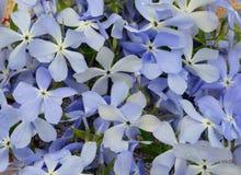 Fält för modell för gräsplan för bukett för tygtextur nytt av flowe för tusensköna för vår för blomma för blom för tusensköna för Royaltyfri Foto