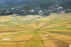 Fält för risfält för spindelrengöringsduk Royaltyfri Foto
