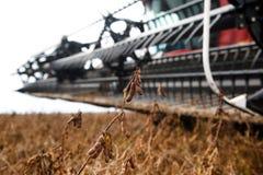 Fält för sojaböna för skördearbetaredanandeplockning Royaltyfri Foto
