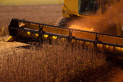 Fält för sojaböna för skördearbetaredanandeplockning - Mato Grosso State - Arkivbilder