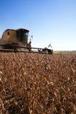 Fält för sojaböna för skördearbetaredanandeplockning - Mato Grosso State - Royaltyfri Bild