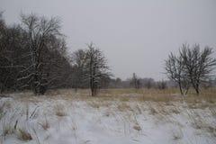 Fält för torrt gräs för fält för frostvinterlandskap snowfall Ryssland fotografering för bildbyråer