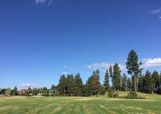 Fält för utomhus- sportar med högväxta träd royaltyfri fotografi