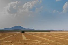 Fält för vete för maskinplockning som upp väljer kornet och gör sugrör arkivbilder