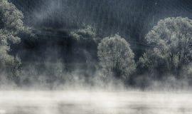 Fält för vindruva med mist i förgrund Royaltyfri Foto