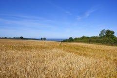 Fält för Yorkshire woldsvete Royaltyfri Bild