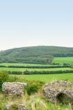 fält gröna ireland Arkivbilder
