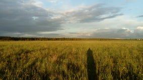 Fält, himmel, skog och skugga arkivfoto
