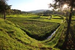 Fält i Afrika Arkivbilder