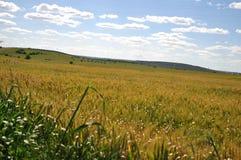 Fält i alentejo Fotografering för Bildbyråer