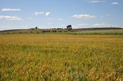 Fält i alentejo Royaltyfria Foton