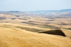 Fält i Basilicata, Italien Royaltyfria Foton