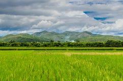 Fält i dalen. Fotografering för Bildbyråer