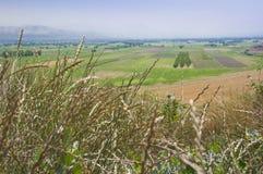 Fält i den Ararat dalen i den armeniska Skotska högländerna Grässpikeletsnärbild Arkivfoto
