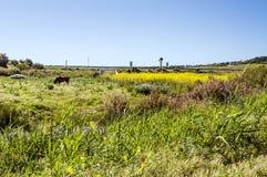 Fält i det spanska landskapet av Cadiz Royaltyfri Bild