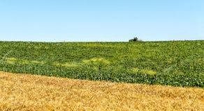 Fält i det spanska landskapet av Cadiz Arkivbild