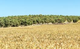 Fält i det spanska landskapet av Cadiz Arkivbilder