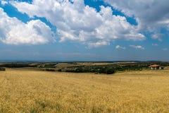 Fält i Grekland Royaltyfri Bild