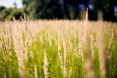 Fält i höstdag Fotografering för Bildbyråer