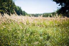 Fält i höstdag Royaltyfria Bilder