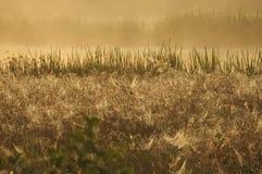 Fält i Holland Arkivfoton