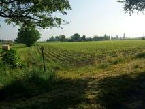 Fält i Italien Arkivfoto
