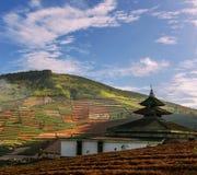 Fält i Java Royaltyfri Foto