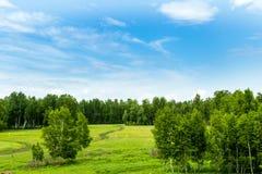 Fält i Juni Arkivfoto