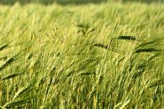 Fält i Krim Royaltyfri Fotografi