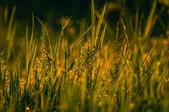 Fält i morgondagg Royaltyfria Foton