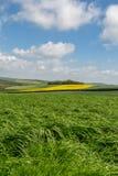Fält i söderna besegrar Royaltyfri Foto