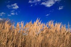 Fält i Sardinia Royaltyfria Foton