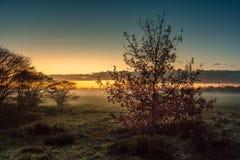 Fält i soluppgången i staden av Blaricum Arkivfoto
