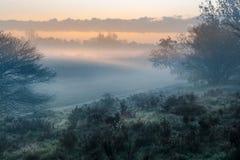Fält i soluppgången i staden av Blaricum royaltyfri fotografi