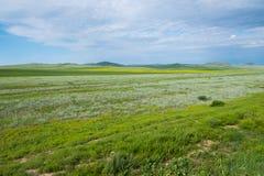 Fält i sommaren fotografering för bildbyråer