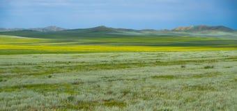 Fält i sommaren arkivbilder