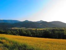 Fält i sommartid i de schweiziska fjällängarna Arkivfoto