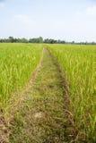 Fält i Thailand. Arkivbild