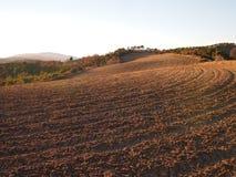 Fält i vinter i Provence Arkivfoto