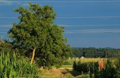 Fält i Zagorje, Kroatien Fotografering för Bildbyråer