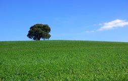 fält isolerad tree Royaltyfri Fotografi