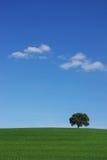 fält isolerad tree Arkivfoton