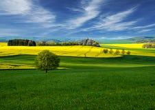 Fält Landskap Raps Canola, Biodieselskörd Fält av den ljusa gula rapsfröt blommar med kullar och träd Sätta in av gula blommor Arkivbilder