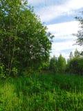 Fält Lupino på en klar solig dag Royaltyfri Bild