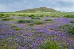 Fält med blommor i sommar arkivbilder