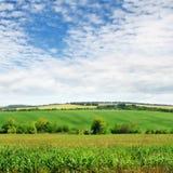 Fält med den gröna växter och skyen Arkivbild