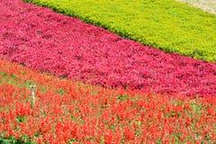 Fält med den olika blomman Royaltyfri Foto